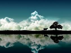 Landscape (20)