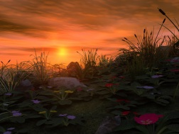 Landscape (34)